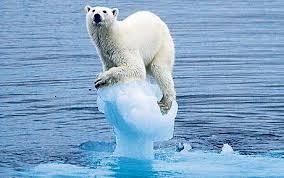 polarbearice