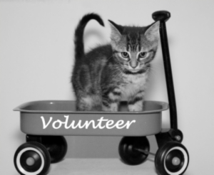 animal volunteer